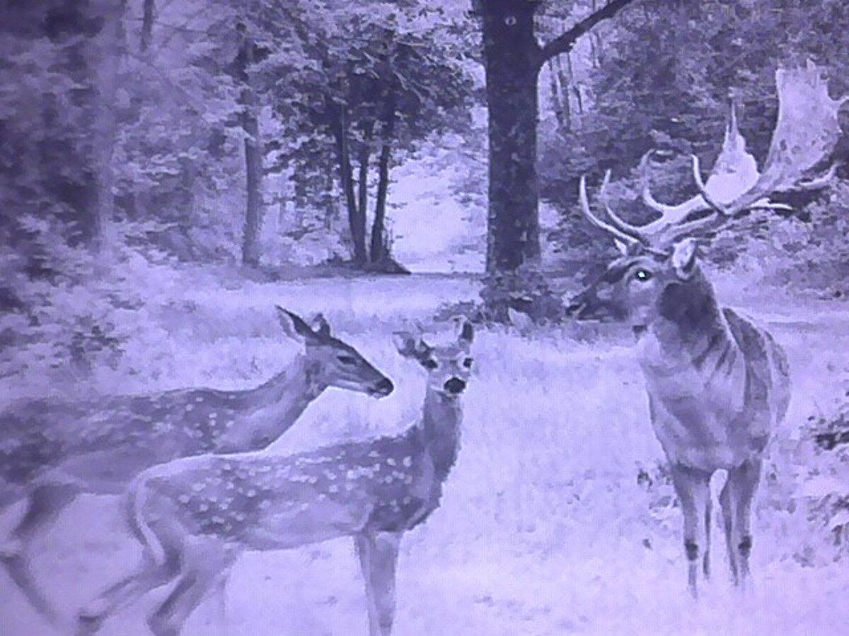 ... Nočné videnie Bresser Digital NV 5x50 foto-video záber srny a jelen v  nočnom lese ... 235048fa661