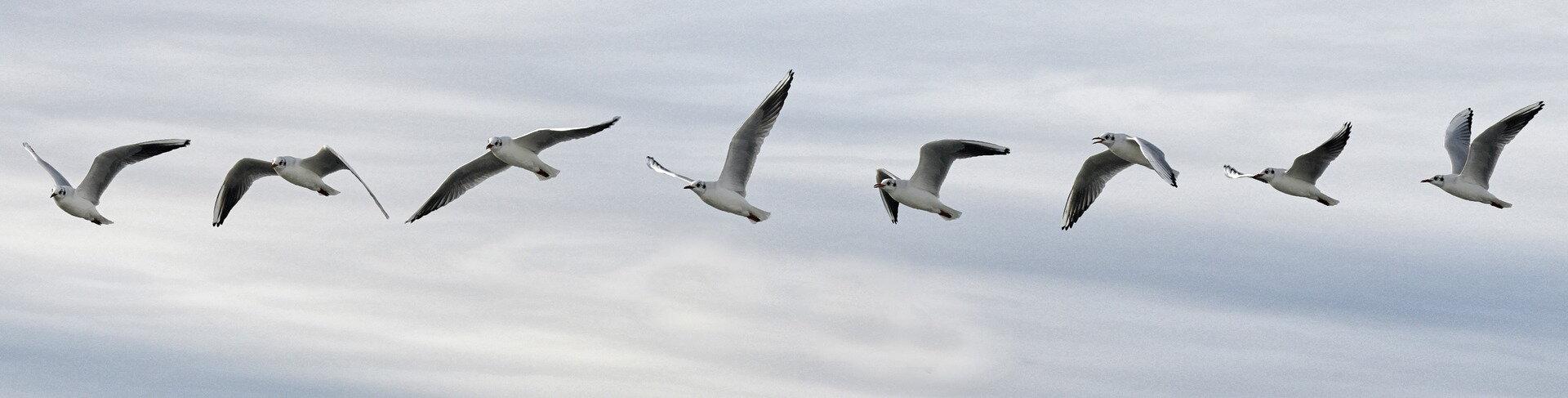 Veľké gigantické vtáky
